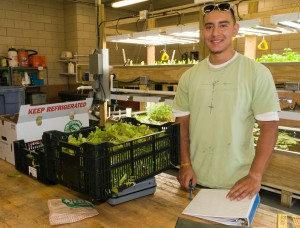 Roots of Success graduate Aaron Serrano graduated from Chicago Botanic Garden's nine-month Windy City Harvest program and was hired by FarmedHere, LLC — a commercial vertical farm in Mid-West Chicago that grows salad greens, culinary herbs and Tilapia fish.
